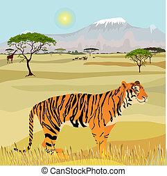 tigre, montaña, africano, paisaje, idealista