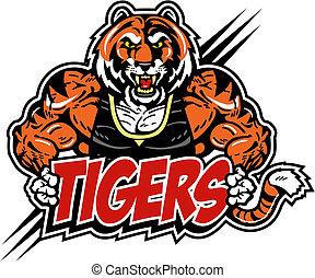 tigre, muscular, medio