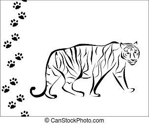 tigre, pas