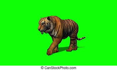 tigre, promenades