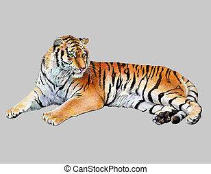 tigre, réaliste, dessin, illustration