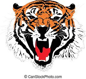 tigre, sumatran, cabeza
