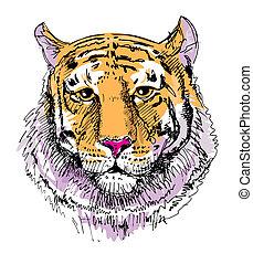 tigre, typon, croquis, dessin