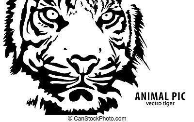 tigre, vecteur