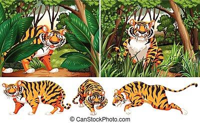 tigres, en, profundo, bosque
