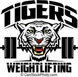 tigres, haltérophilie