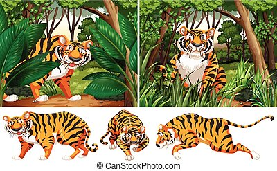 tigri, foresta, profondo