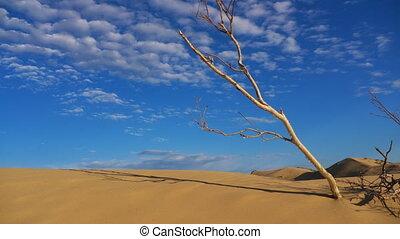 tijd, woestijn, schoten