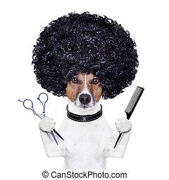 tijeras, peluquero, perro, peine