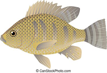 Tilapia fish cartoon vector illustration