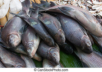 Tilapia freshwater fish on thailand local market - Tilapia...
