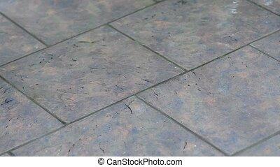 Tile in the rain