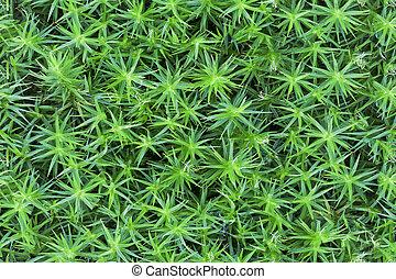 Tileable forest moss texture.