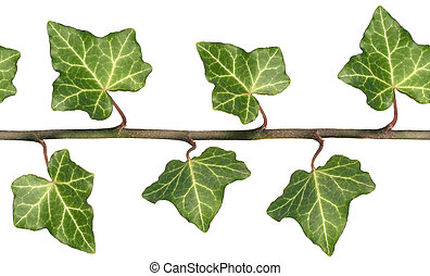 English Ivy, a repeating seamless tileable closeup image.