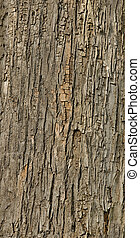 Detailed tiled seamless tree bark texture background