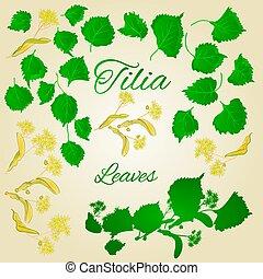 Tilia-Linden leaves with Linden flowers vector.eps