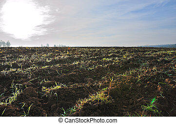 Tillage - Farming field at sunny autumn morning, cloudy sky