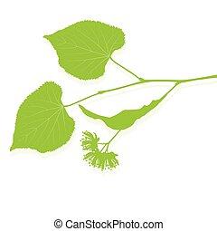 tilleul, vecteur, fond, fleurs, écologie, résumé