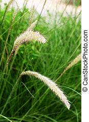 tillsluta, av, fontän gräs, in, den, fält