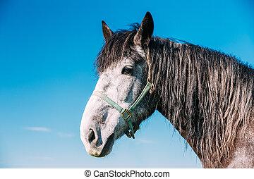 tillsluta, av, häst, på, blåttsky, bakgrund