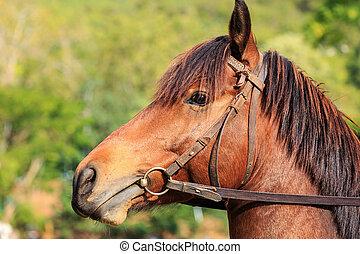 tillsluta, hästar, in, den, fält