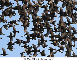 tillsluta, skocka av fåglar, på, blåttsky