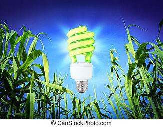 tillväxt, ekologi, -, cf, lampa