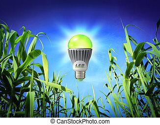 tillväxt, ekologi, -, fört, lampa