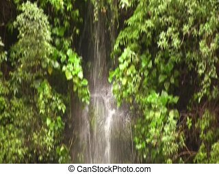 Tilt down a cloudforest waterfall - In the Ecuadorian Andes