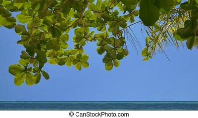 Tilt down of the peaceful tropical beach - Camera tilt down...
