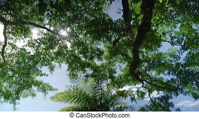 Tilt down shot of a palm tree. - A medium shot tilting down...