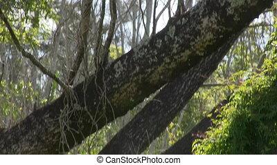 Tilt down shot of the woods - A tilt down shot of a creepy...