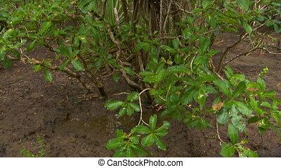 Tilt up a bush in the woods - Close up of a bush, tilting up...