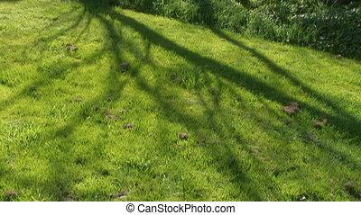 A tilt up shot of a leafless tree.