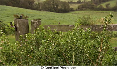 Tilting up shot of a bush and fence to the hills