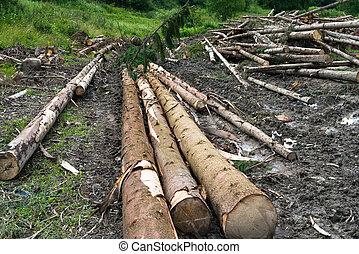 Timber harvesting. Piles of cut fir logs