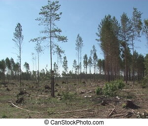 timber industry - Deforested recreational area. Timber...
