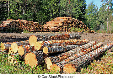 Timber Logging in Forest - Stacks of logs at a forest...
