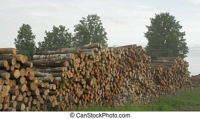 timber piled up after felling - Cut wood logs stacked...