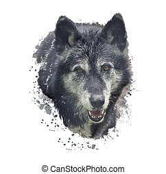 Timber Wolf watercolor illustration - Digital Painting of ...