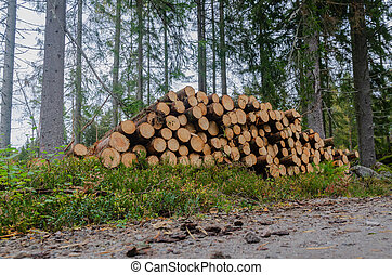 Timberstack among spruce trees by road side