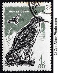 timbre postal, 1965, russie, proie, commun, buse, oiseau