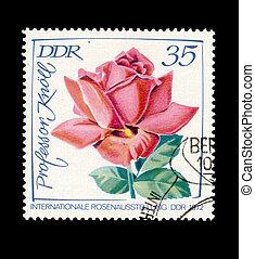 timbre, rose