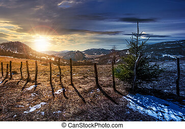 time change concept spruce tree on a hillside. beautiful...