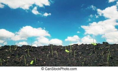 time-lapse, быстрый, рост, plants