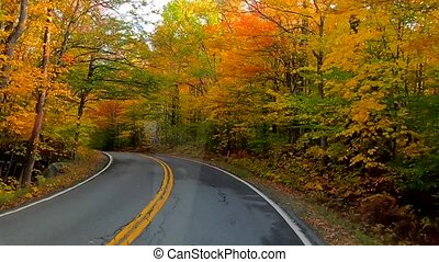 Time Lapse - Driving Under Trees in Full Color During Fall in Vermont.