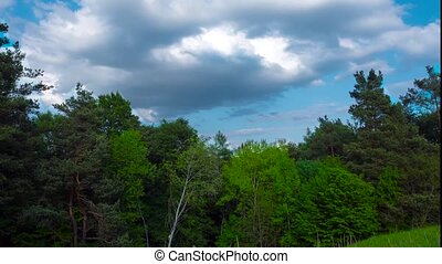 Time-lapse Green forest and clouds.