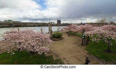Time lapse in park Spring season 4k