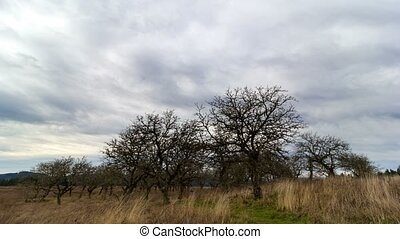Time lapse of clouds over meadowland in Powell Butte Nature Park in Portland OR