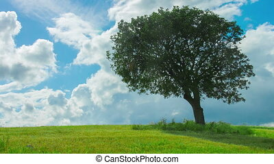 """Time-lapse of green tree growing in field under cloudy sky. Weather forecast"""